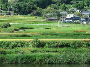 23yoshimi2.jpg