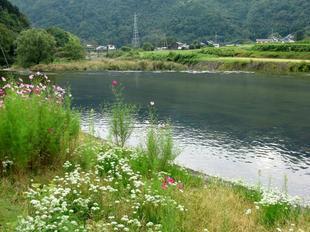 yoshimi9.jpg