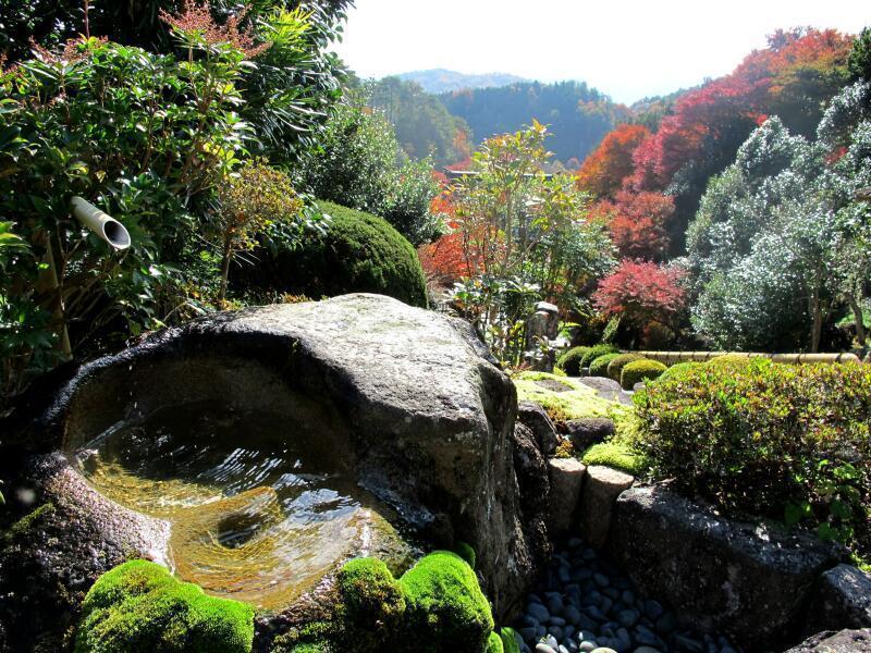 津山瓦版夢中山 幻住寺の裏山のシイの木が見事です。