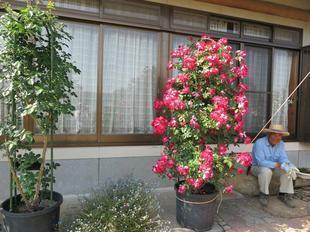 2017koumotobara39.jpg