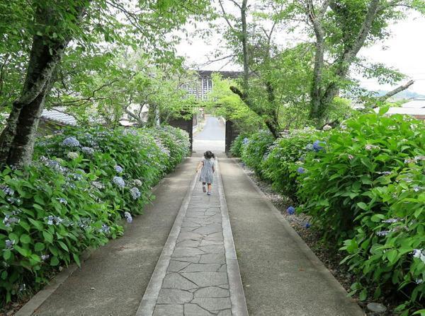 長法寺のアジサイの花