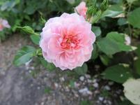 hirayama5-25-39.jpg