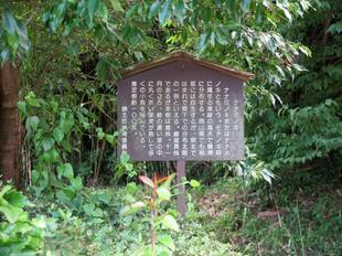 nanaminoki8.jpg