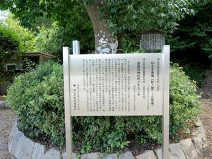 nanaminoki9.jpg