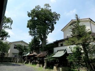 sumiyoshiki1-3.jpg