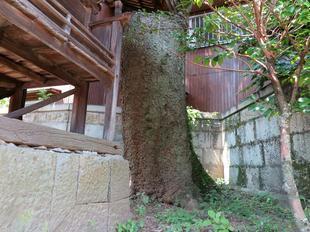 sumiyoshiki2-4.jpg