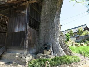 wakamiya-6.jpg