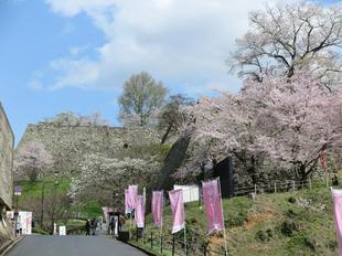 2017-04-12sakura160.JPG