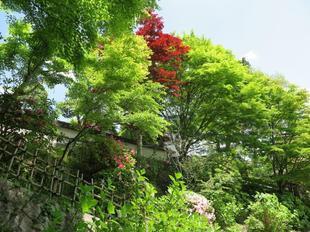 fumonji1.jpg