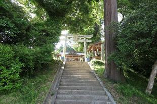 hirodo-sugi-9.jpg