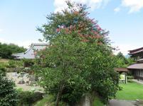 shinzenkouji8-12-31.jpg
