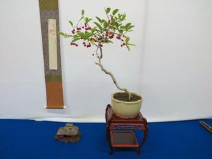 bonsai14.jpg