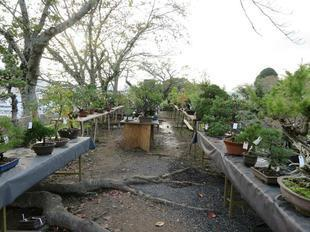 bonsai21.jpg