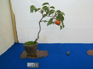 bonsai25.jpg