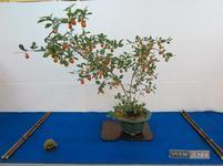 bonsai5.jpg