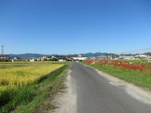 kawasakihigan12.jpg
