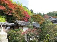 momiji_tera5.jpg