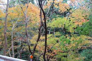 tsugawa11-23-2.jpg