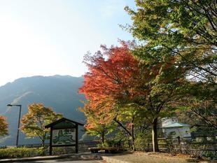 tsugawa2.jpg