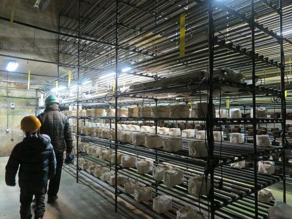 柵原鉱山で「坑道農業見学会」