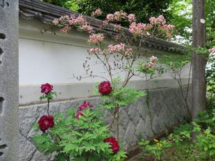 ishiyama-b33.jpg