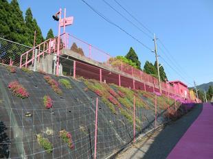 koiyamagata5.jpg