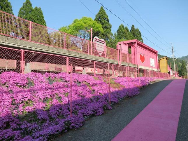koiyamagata6.jpg