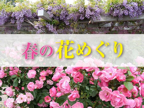 春の花めぐり2016