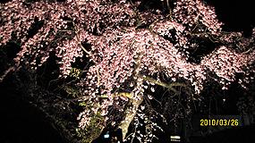 夜桜 285_2