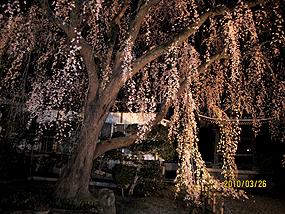 千光寺、ライトアップ。(2)
