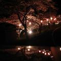 ウッドパーク声ヶ乢の夜桜