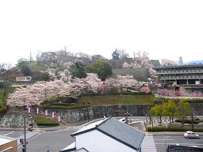 chikamitsu.800.jpg