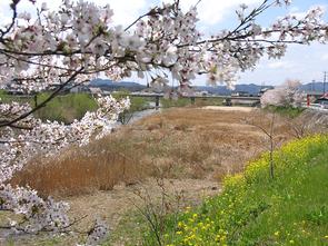 fujiyoshi1.jpg