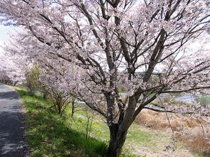 fujiyoshi4.jpg