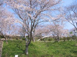 kagura80012.jpg