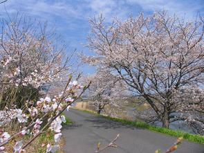 kawasaki01.jpg