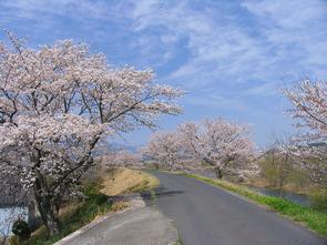 kawasaki05.jpg