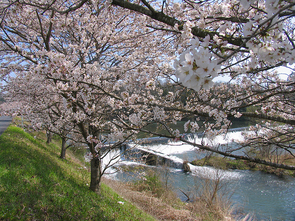 kawasaki07.jpg