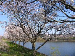 kawasaki800_1.jpg