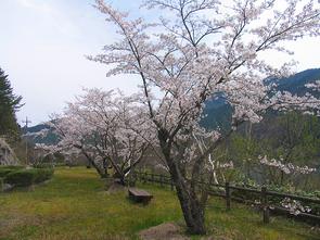 kuroki2.jpg