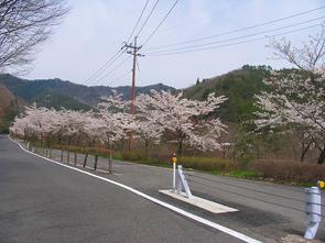 kuroki4.jpg