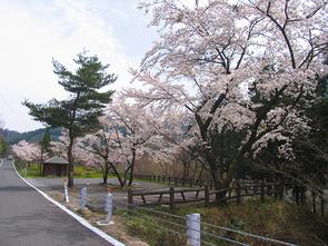 kuroki5.jpg