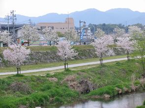 miyagawa2.jpg