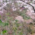 大谷の石山寺上り口