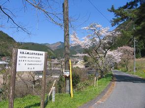 yahazu2.jpg