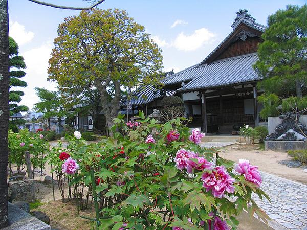 aizenji_botan.jpg