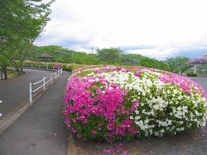 kagurao8.jpg