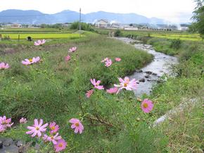 kosumossu_1.jpg800.jpg