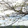 山桜、彼岸花、くちなしが咲いています。