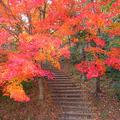 神楽尾公園の紅葉(2010年)
